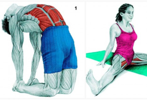 Pictures to Show Which Muscles You're Stretching