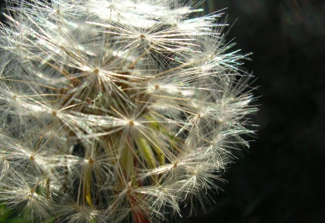 FAQ: Can Allergies Increase Your Risk Of Depression?