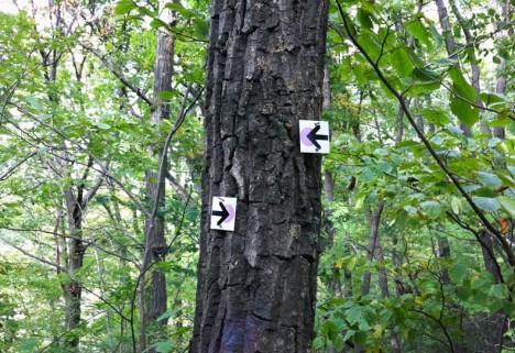 We Did It: Hiking