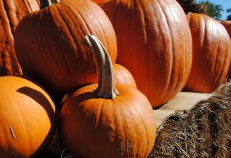 Today's Greatist Tip: Tap Into Pumpkins' Health Benefits
