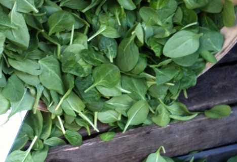 News: Ultrasound Technology Can Make Spinach Safer
