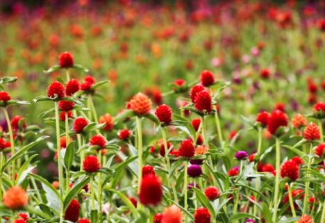 The Best Ways to Beat Spring Allergies
