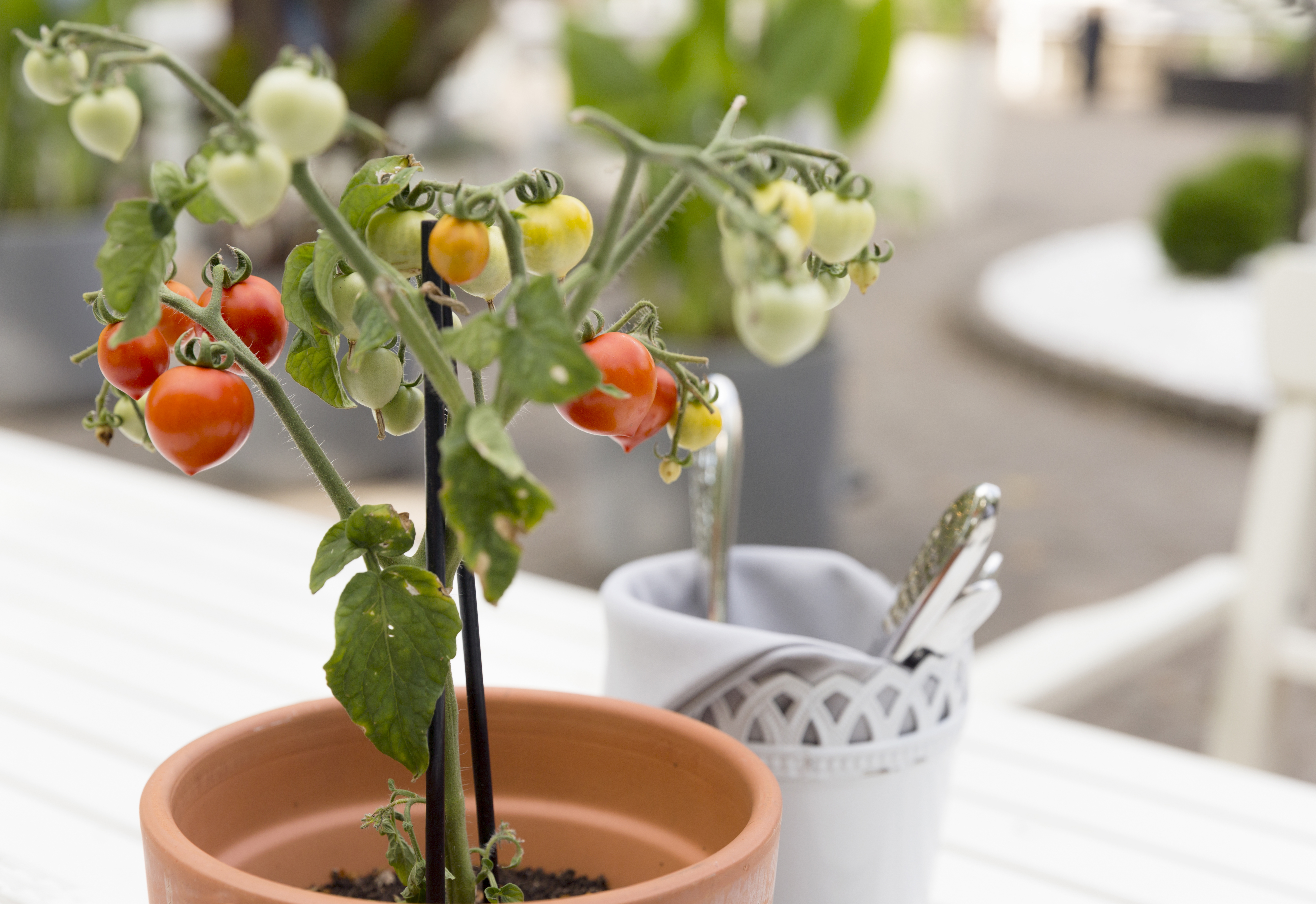 Growing Vegetables Indoors Is Easier Than You Think (Even in an Apartment)