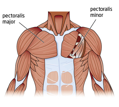 push-ups or bench press for a better chest? | greatist pectoralis diagram ma