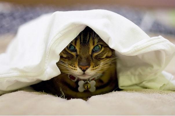 common cold cat