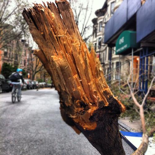 Sandy Snapped Tree